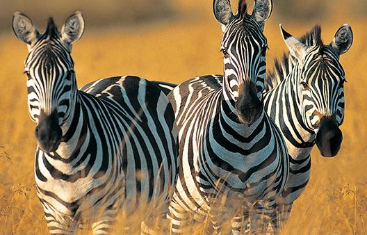 Barrett HF communications to support wildlife management in Tanzania
